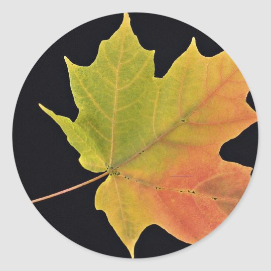 Inspiring Sugar maple leaf Classic Round Sticker