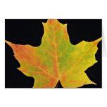 inspiring Sugar maple yellow leaf Card