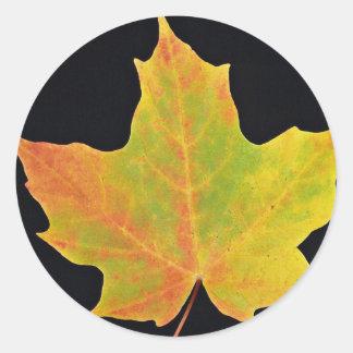 inspiring Sugar maple yellow leaf Classic Round Sticker