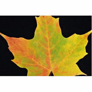 inspiring Sugar maple yellow leaf Photo Cut Out