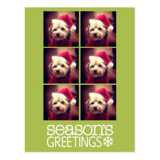 Instagram 6 photo collage - lime background postcard