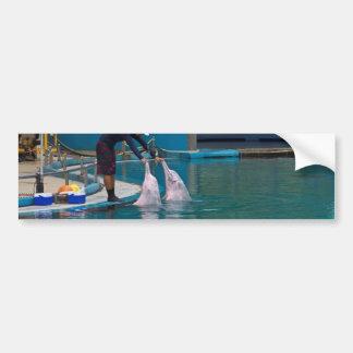 Instructor que acaricia al delfín durante la pegatina de parachoque