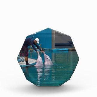 Instructor que acaricia al delfín durante la