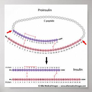 Insulina y proinsulin impresiones
