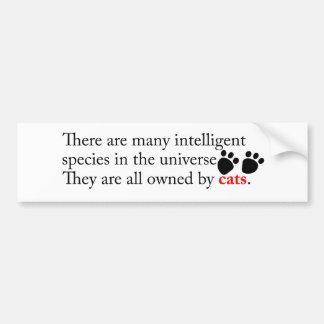 Intelligent Cats Own Us Bumper Sticker