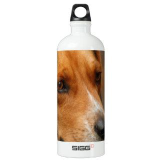 Intelligent Focussed Beagle Hunting Dog Aluminum Water Bottle