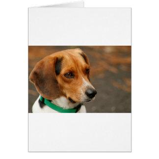 Intelligent Focussed Beagle Hunting Dog Card