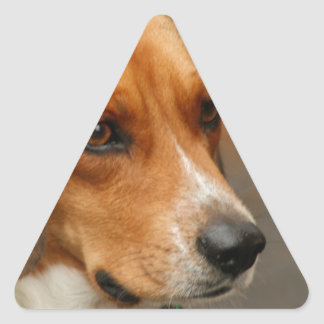 Intelligent Focussed Beagle Hunting Dog Triangle Sticker