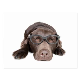 Intelligent Labrador Postcard