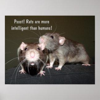 intelligent rats poster