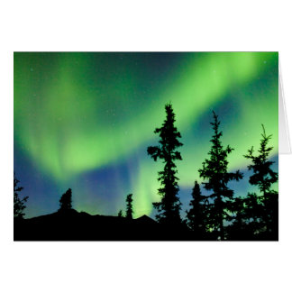 Intense Aurora borealis over black spruce taiga Card