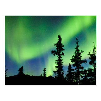 Intense Aurora borealis over black spruce taiga Postcard