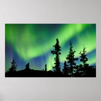 Intense Aurora borealis over black spruce taiga Poster