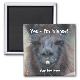 Intense Black Llama Funny Animal Magnet