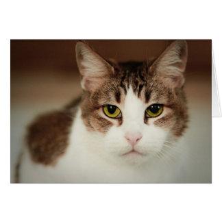 Intense Cat Greeting Card