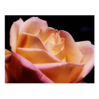 Intense Colored Yellow Rose Flower Postcard