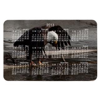 Intense Concentration; 2013 Calendar Rectangular Photo Magnet