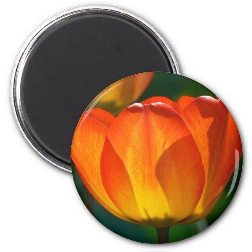 Intense Orange Bloom Magnet