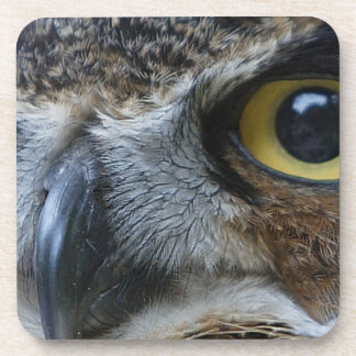 Intense Owl Beverage Coaster