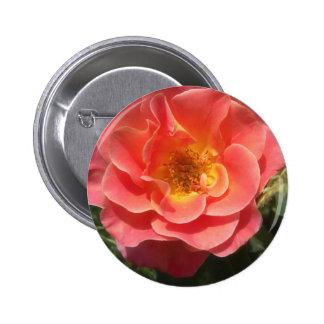 Intense Pink and Yellow Rose 2 Pinback Button