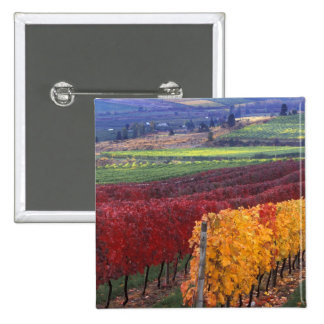 Intense red and yellow fall colors on Gehring 2 Inch Square Button