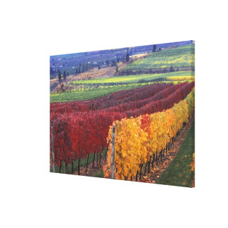 Intense red and yellow fall colors on Gehring Canvas Print