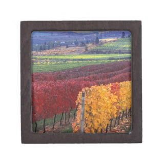 Intense red and yellow fall colors on Gehring Gift Box