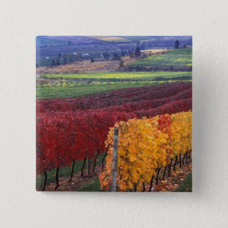 Intense red and yellow fall colors on Gehring Pinback Button