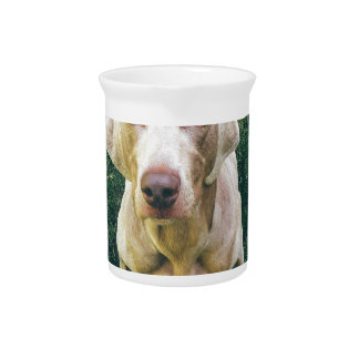 Intense Weimaraner Pitcher