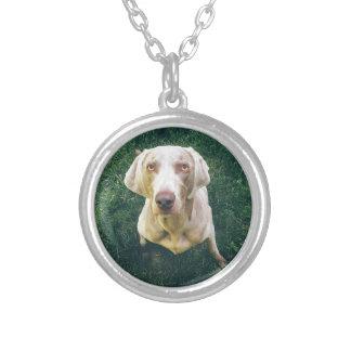 Intense Weimaraner Silver Plated Necklace