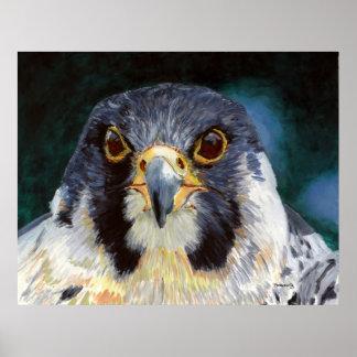 Intensidad - la mirada del halcón póster