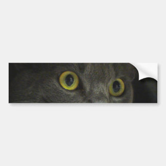 Intensity Bumper Sticker
