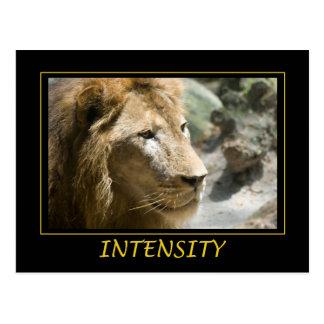 Intensity Postcard