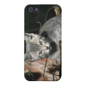 Intent gray kitten iPhone SE/5/5s case