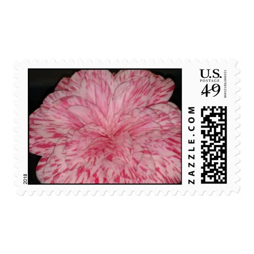 Interesting Pink & White Camellia Japonica Flower Stamp