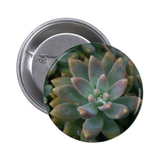 Interesting succulent plant, use as is or...... 2 inch round button