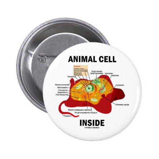 Interior animal de la célula (biología celular del pins