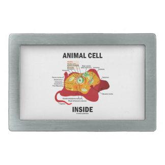 Interior animal de la célula (célula eucariótica hebilla de cinturón rectangular