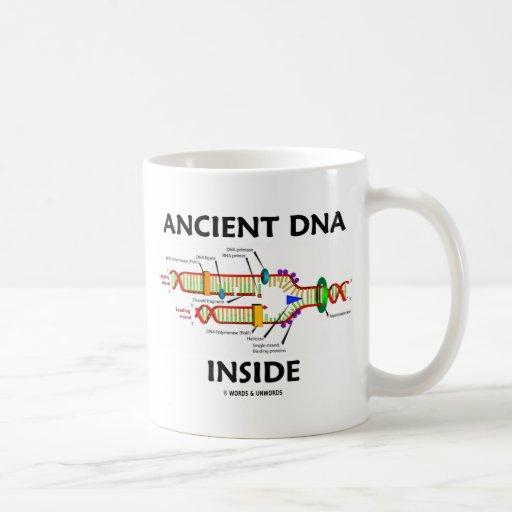 Interior antiguo de la DNA (humor de la réplica de Taza De Café