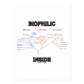 Interior Biophilic (árbol de la vida filogenético) Postal