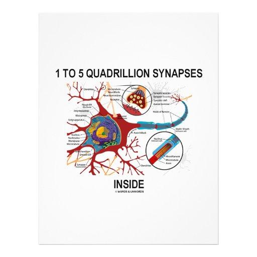 Interior de 1 a 5 sinapsis del cuatrillón (neurona tarjeton