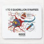 Interior de 1 a 5 sinapsis del cuatrillón (neurona alfombrilla de ratones