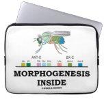 Interior de la morfogénesis (genes de la caja fundas portátiles