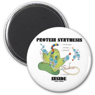 Interior de la síntesis de la proteína (biología c iman de nevera
