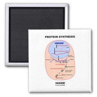 Interior de la síntesis de la proteína (diagrama d imanes de nevera