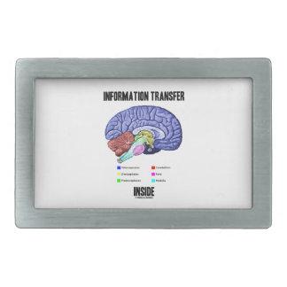 Interior de la transmisión informativa (anatomía hebillas de cinturon rectangulares