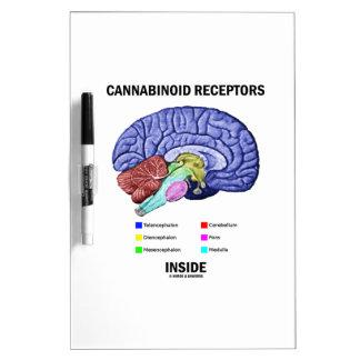 Interior de los receptores de Cannabinoid anatomí