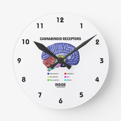 Interior de los receptores de Cannabinoid (anatomí Relojes De Pared