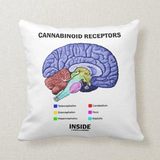 Interior de los receptores de Cannabinoid Cojines