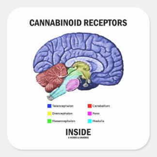Interior de los receptores de Cannabinoid Calcomanias Cuadradas